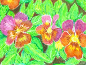Pansy Bed by Mollie Pearce McKibbon