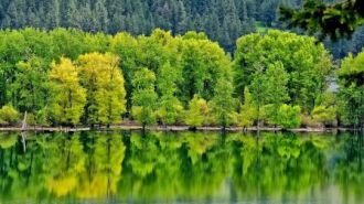 forest_reflection_in_lake_mountain_nature_hd-wallpaper-1500088
