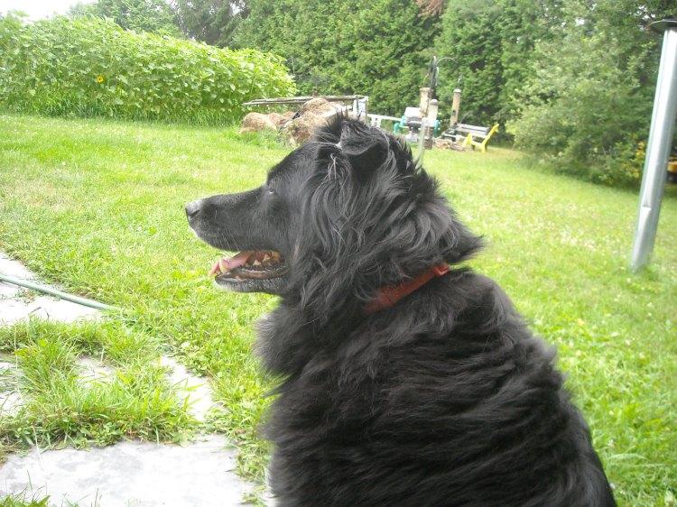 Ceilidh in the garden