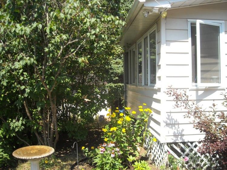 Black-eyed susans near the porch