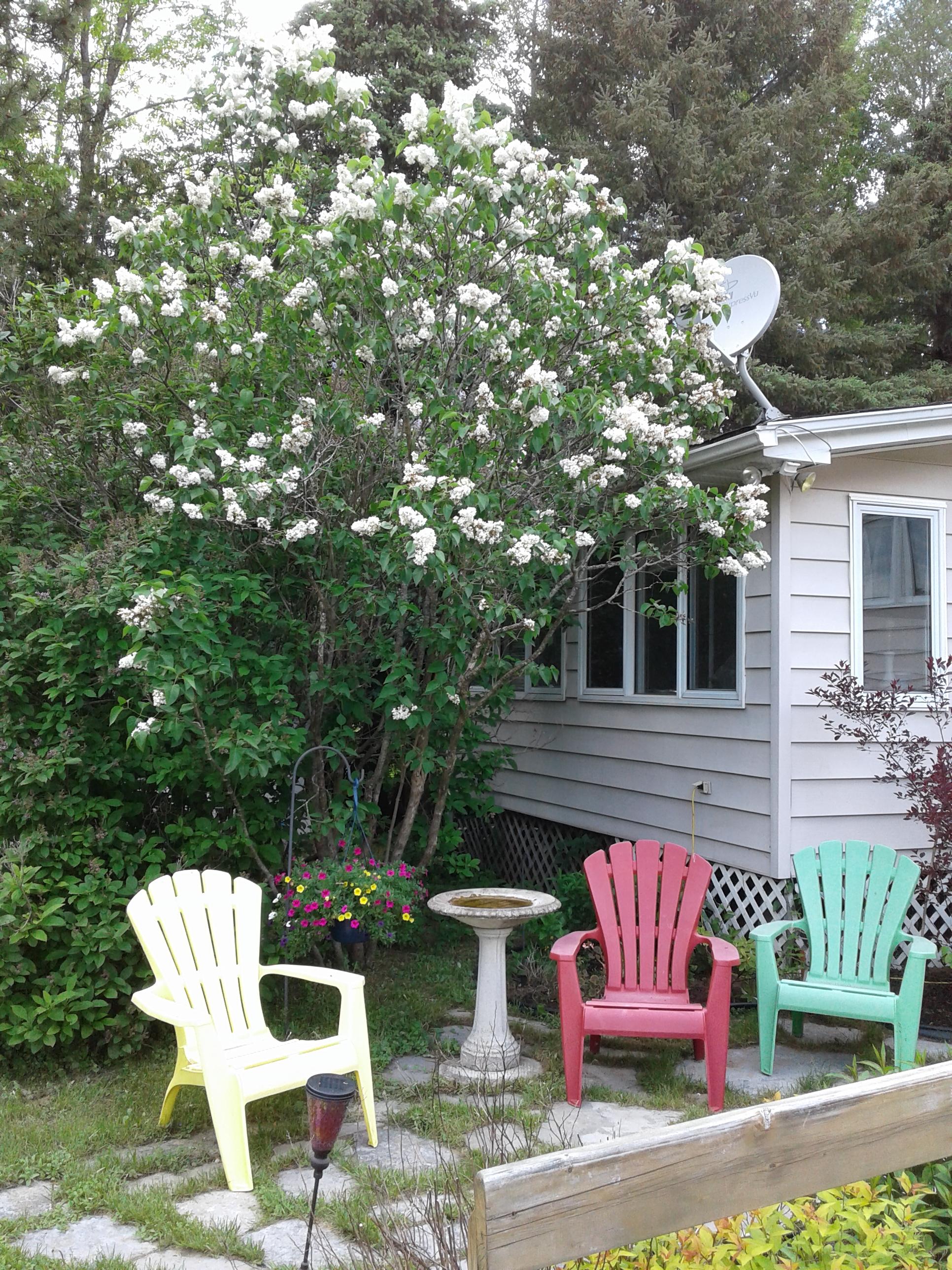 Garden nook with lilacs