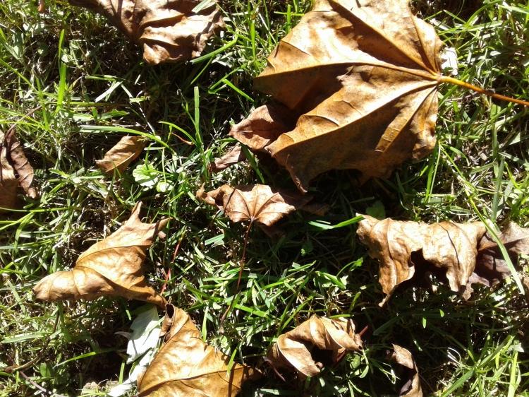 crispy leaves.jpg
