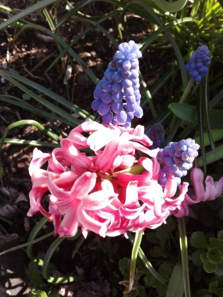 hyacinth 2028
