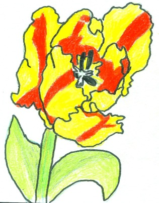 A Red and yellow tulip