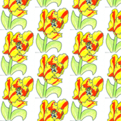 ra-red-and-yellow-tulip_my pattern in Spoonflower