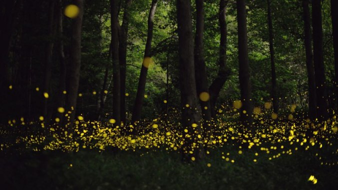 fireflies-at-night-tsuneaki-hiramatsu-6