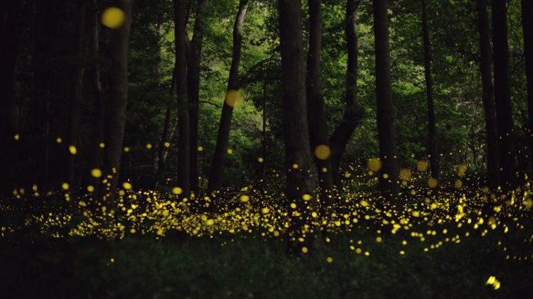 fireflies-at-night-tsuneaki-hiramatsu-6