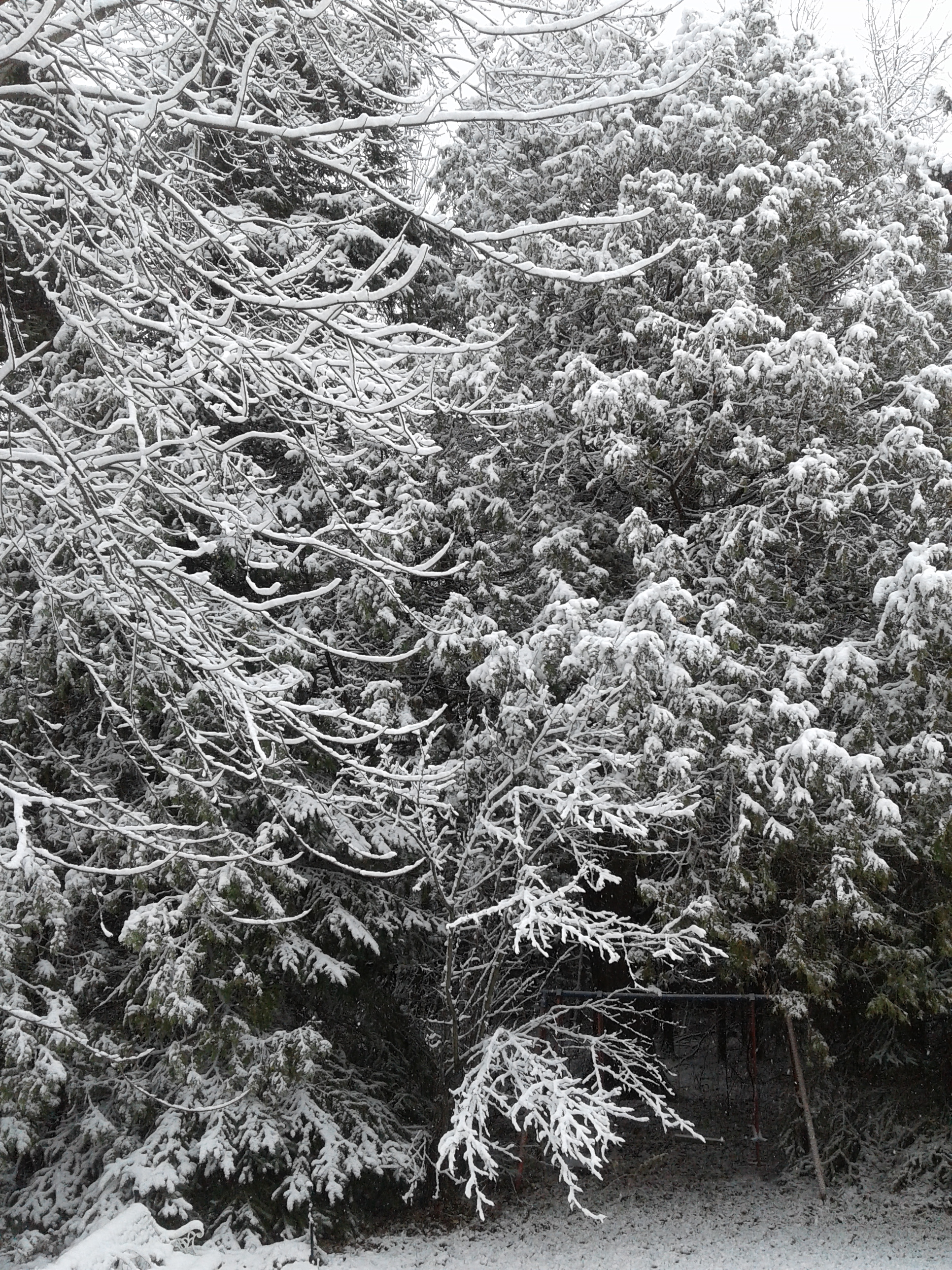 snow laden branches 2019